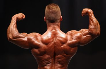 Muscle Making Real Truth Generally Asked Queries