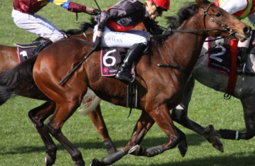 Saddle Becoming Wider Horse Breeds Like Native Ponies And Cobs